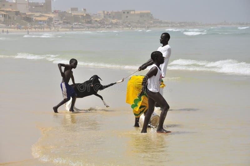 Αφρικανικά παιδιά στην παραλία με την αίγα στοκ φωτογραφία με δικαίωμα ελεύθερης χρήσης