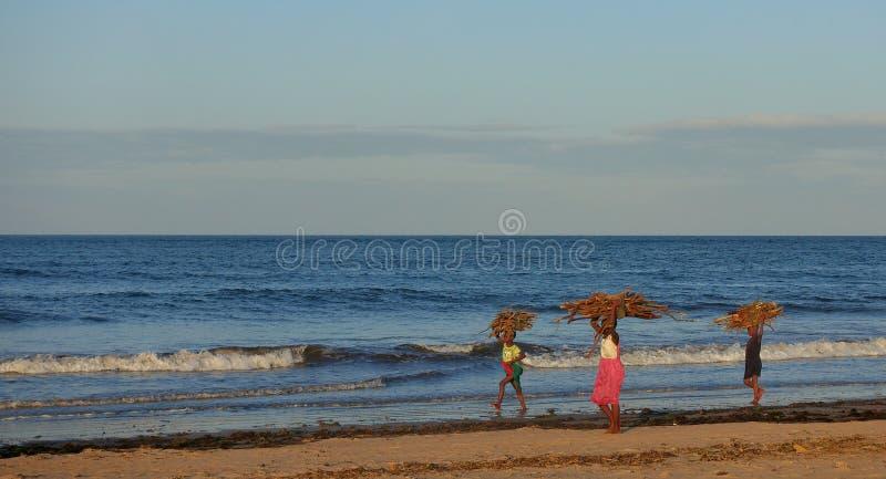 Αφρικανικά παιδιά που φέρνουν το καυσόξυλο στοκ φωτογραφία με δικαίωμα ελεύθερης χρήσης