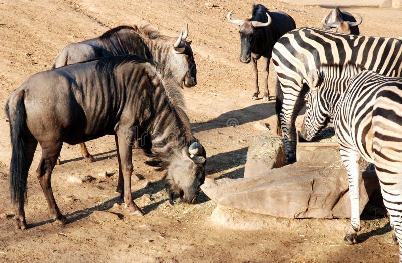 αφρικανική άγρια φύση στοκ εικόνες