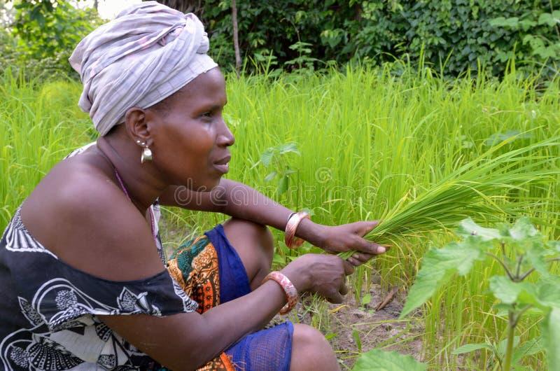 Αφρικανική γυναίκα στοκ εικόνες