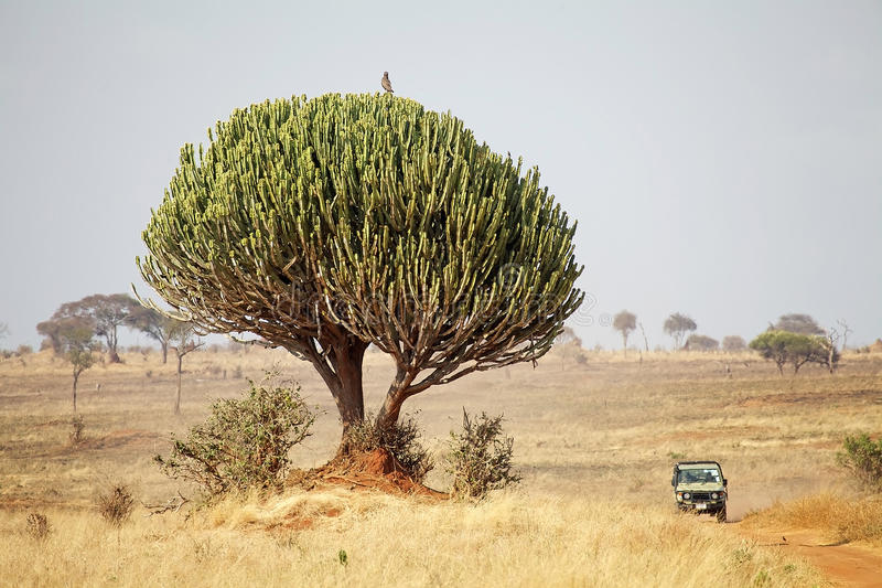 Αφρικανική σαβάνα στοκ εικόνα