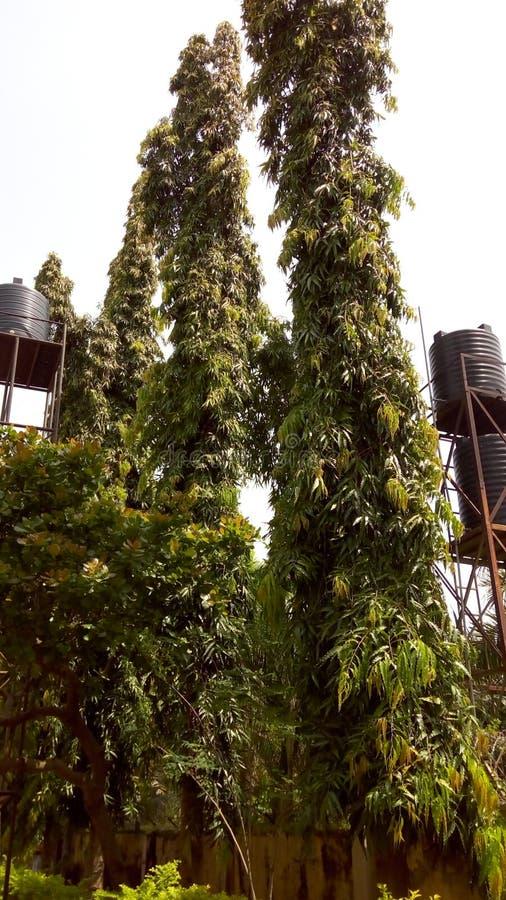 Αφρικανικού δέντρου στοκ φωτογραφία με δικαίωμα ελεύθερης χρήσης