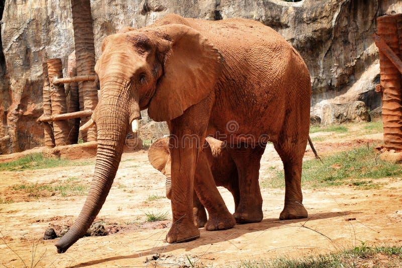 Αφρικανικός ελέφαντας mom με το μωρό στοκ εικόνες με δικαίωμα ελεύθερης χρήσης