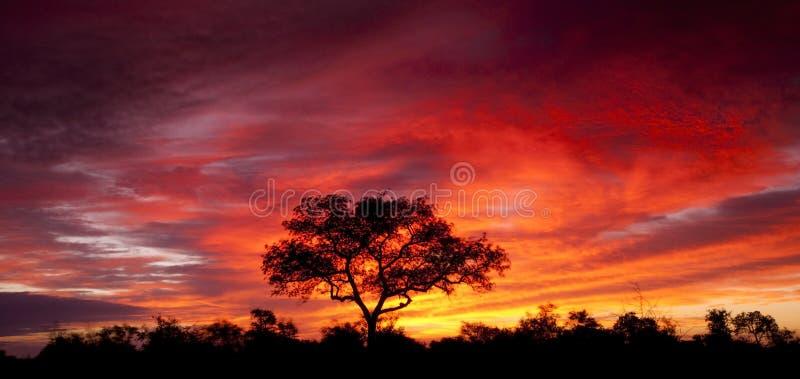 αφρικανικό ηλιοβασίλεμ&alp στοκ φωτογραφία με δικαίωμα ελεύθερης χρήσης