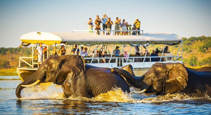 Αφρικανικό σαφάρι ελεφάντων στοκ εικόνα