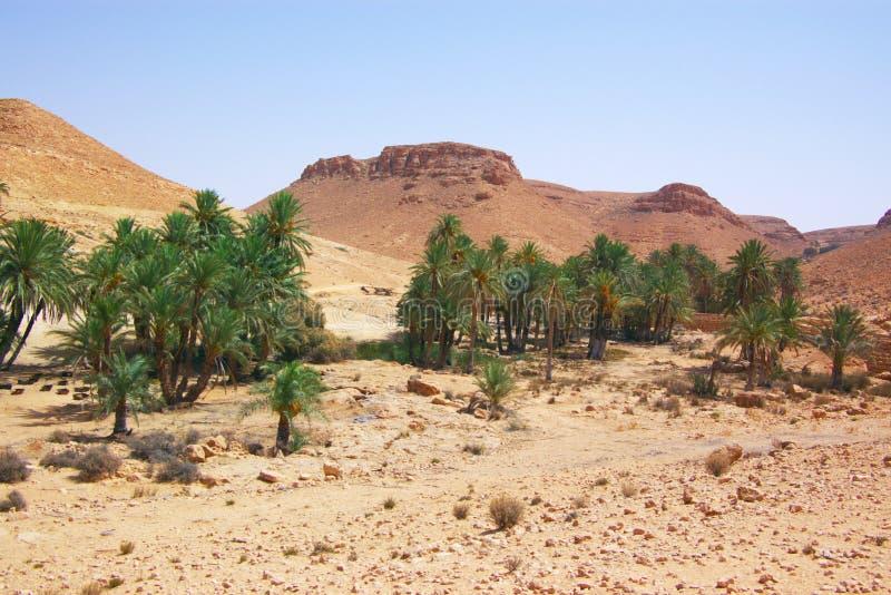 αφρικανικό τοπίο ερήμων στοκ εικόνες