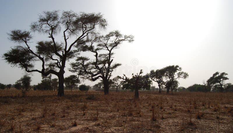 αφρικανικό τοπίο στοκ φωτογραφία με δικαίωμα ελεύθερης χρήσης