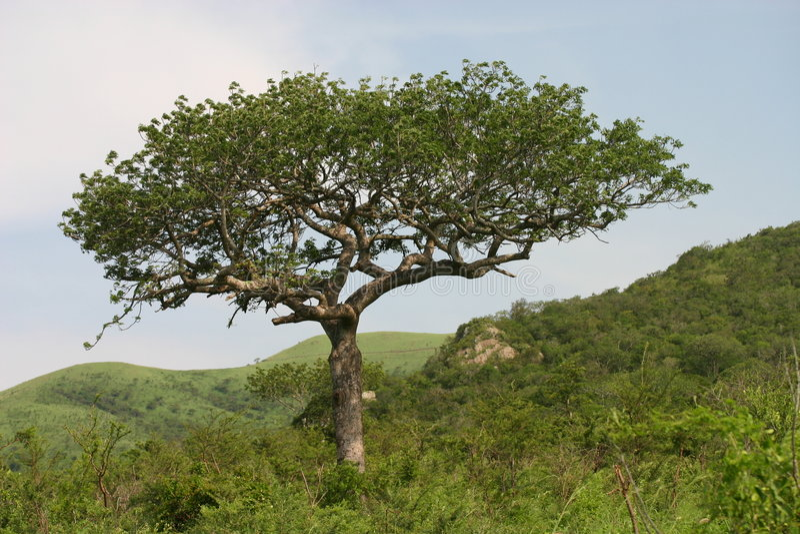 αφρικανικό τοπίο στοκ εικόνες με δικαίωμα ελεύθερης χρήσης