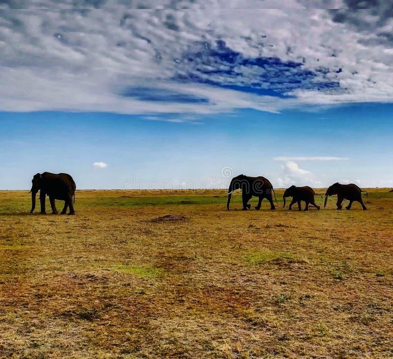 Αφρικανικό ύφος στοκ φωτογραφίες
