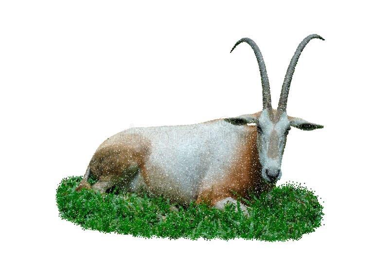 Αφρικανοί εγκαταλείπουν τη ζωή gazella oryx η ανασκόπηση απομόνωσε το λευκό επίσης corel σύρετε το διάνυσμα απεικόνισης ελεύθερη απεικόνιση δικαιώματος
