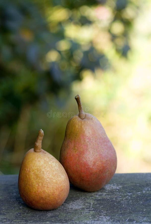 αχλάδια ζευγαριού στοκ εικόνες