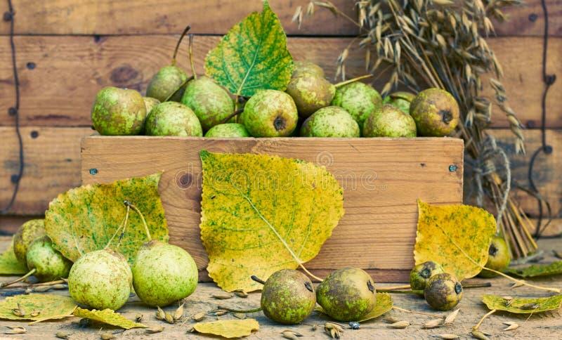 Αχλάδια με τη σύσταση, τα πεσμένα κίτρινα φύλλα φθινοπώρου και το σιτάρι βρωμών στοκ εικόνα με δικαίωμα ελεύθερης χρήσης