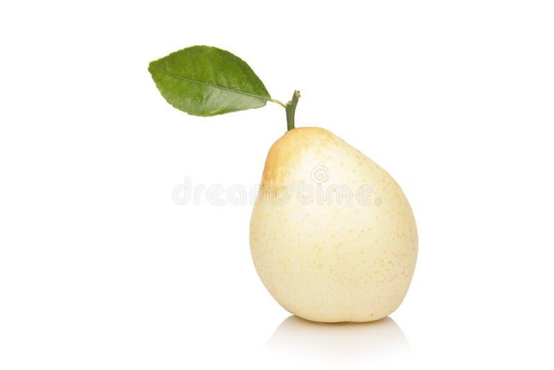 αχλάδι nashi στοκ εικόνα με δικαίωμα ελεύθερης χρήσης