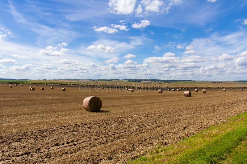 Αύγουστος στους της Λευκορωσίας τομείς - η χλόη έχει αφαιρεθεί στοκ φωτογραφία με δικαίωμα ελεύθερης χρήσης