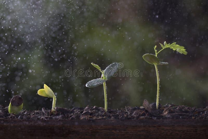 Αύξηση εγκαταστάσεων από το δέντρο σπόρου στοκ φωτογραφία με δικαίωμα ελεύθερης χρήσης