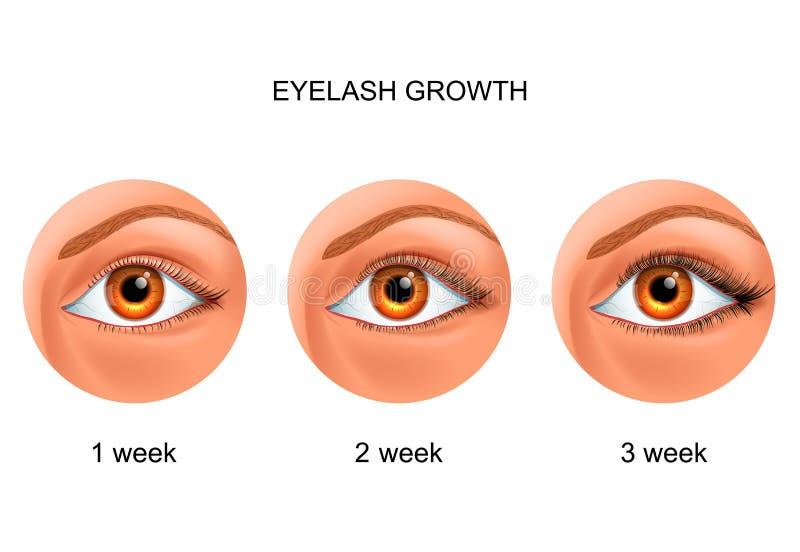 Αύξηση Eyelash πριν και μετά από διανυσματική απεικόνιση