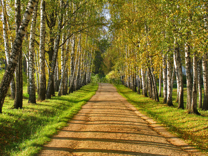 Αλέα σημύδων - Preshpect το φθινόπωρο, Yasnaya Polyana, Τούλα, Ρωσία στοκ φωτογραφία με δικαίωμα ελεύθερης χρήσης