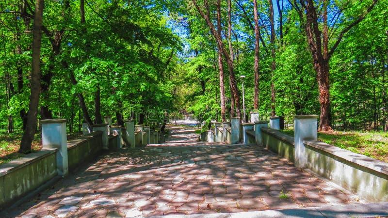 Αλέα στο πάρκο της Στρατιωτικής Ακαδημίας Georgi Sava Rakovski στο κέντρο της Sofia bulblet στοκ εικόνα με δικαίωμα ελεύθερης χρήσης