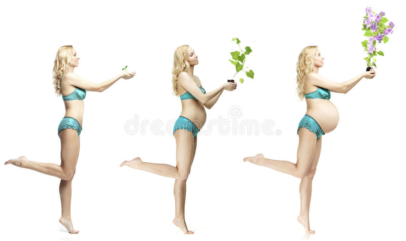 Αλλαγές σωμάτων γυναικών ` s κατά τη διάρκεια της εγκυμοσύνης Η δυναμική του devel στοκ φωτογραφία με δικαίωμα ελεύθερης χρήσης