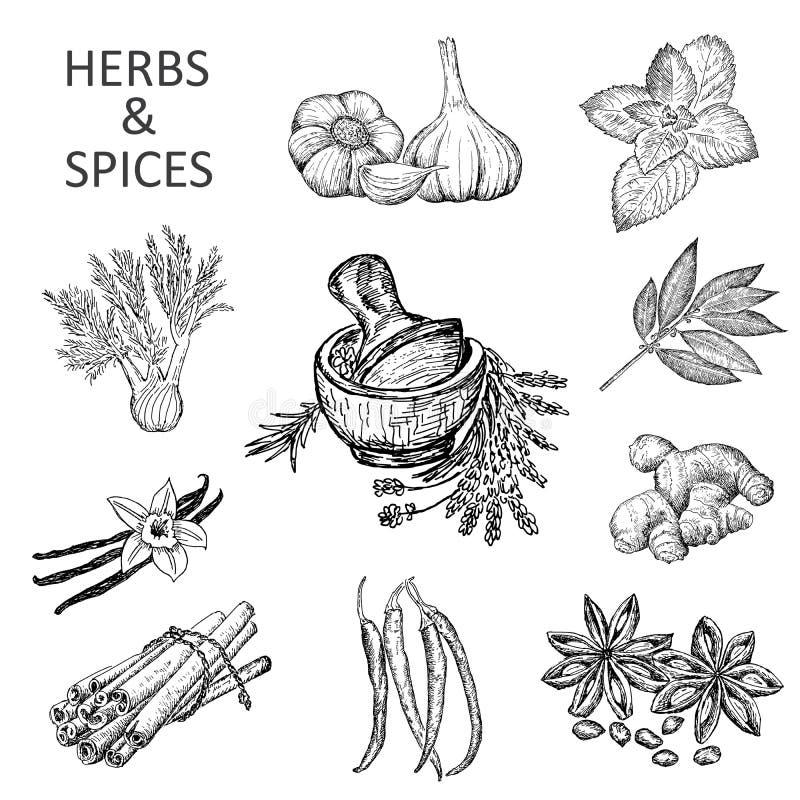 αλατισμένη βανίλια καρυκευμάτων δεντρολιβάνου πιπεριών φύλλων χορταριών σκόρδου κόλπων cardamon απεικόνιση αποθεμάτων