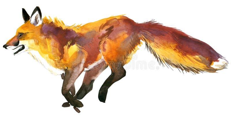 αλεπού Κυνήγι αλεπούδων χαριτωμένη αλεπού Απεικόνιση αλεπούδων Watercolor απεικόνιση αποθεμάτων