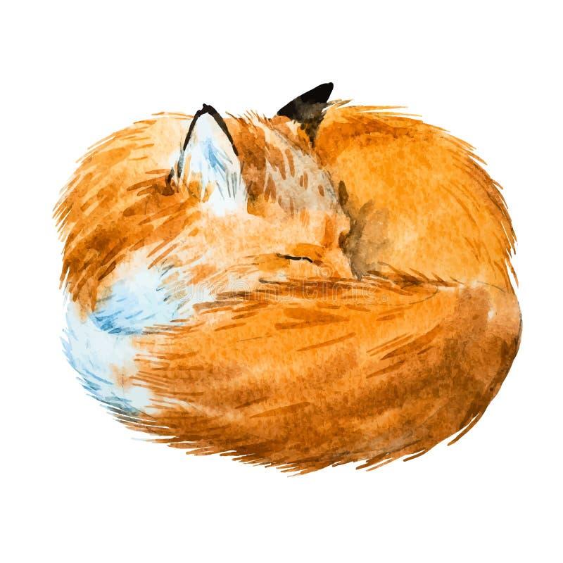 Αλεπού ύπνου Watercolor διανυσματική απεικόνιση