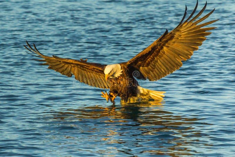 Αλιεία αετών στοκ φωτογραφία