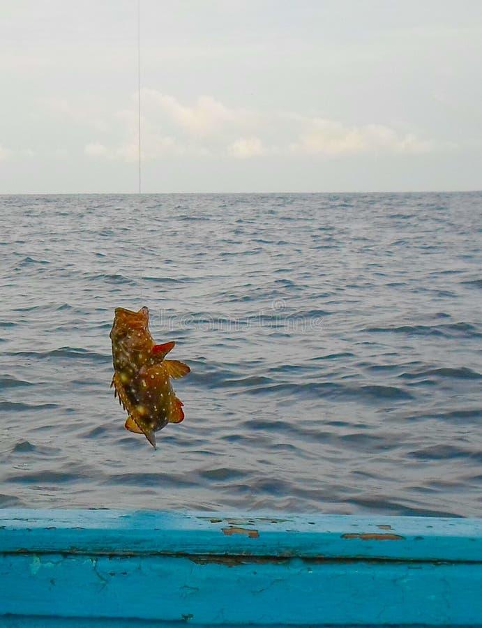 Αλιεία grouper Mero στοκ φωτογραφία με δικαίωμα ελεύθερης χρήσης