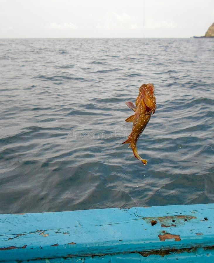 Αλιεία grouper Mero στοκ εικόνες