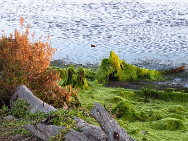 Αλλοδαπή παραλία στοκ φωτογραφίες με δικαίωμα ελεύθερης χρήσης