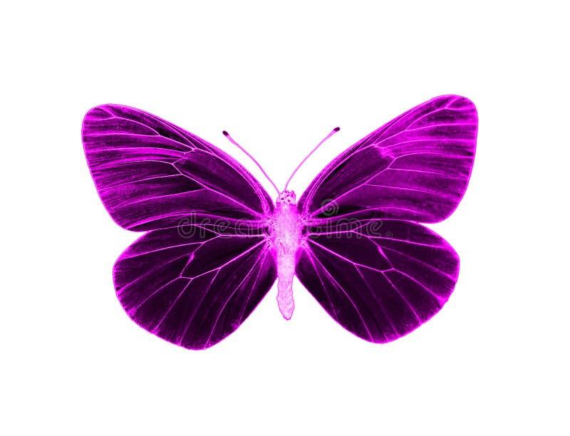 αλλοδαπή πεταλούδα στοκ φωτογραφία