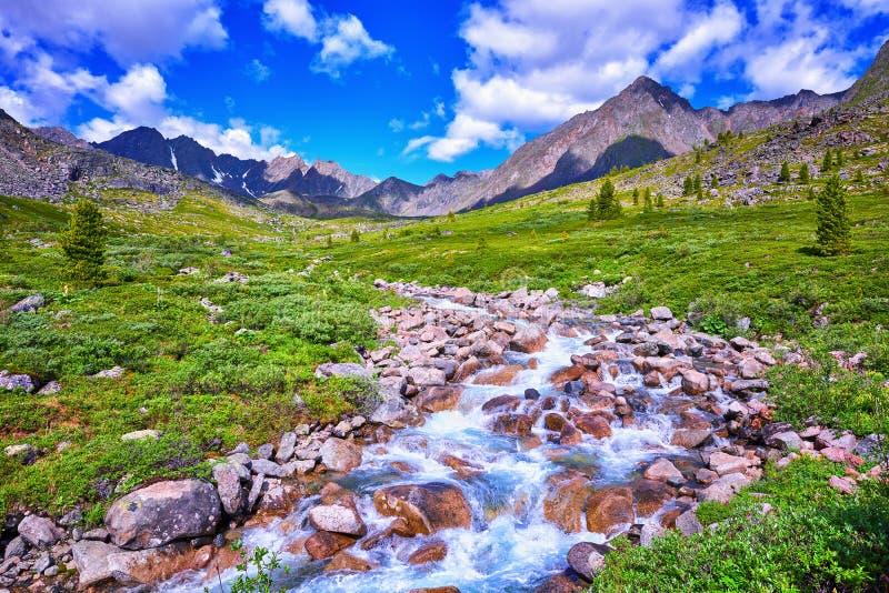 Αλπικές σιβηρικές ορεινές περιοχές λιβαδιών στοκ εικόνες με δικαίωμα ελεύθερης χρήσης