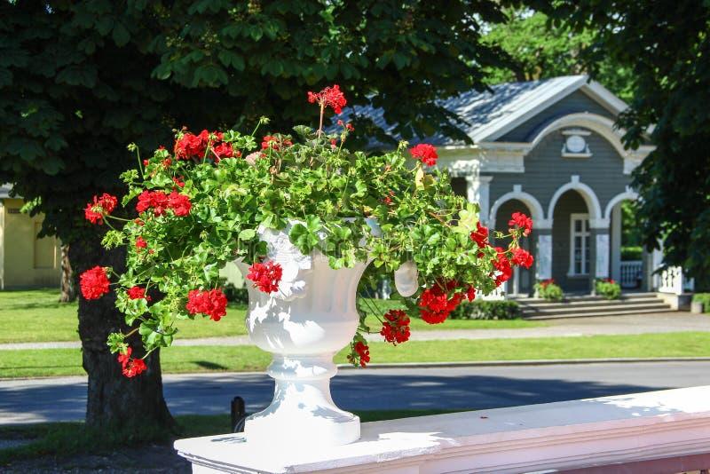 βάζο με τα κόκκινα λουλούδια στοκ εικόνες