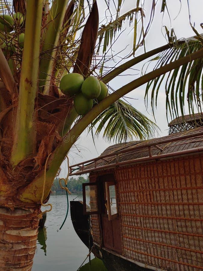 Βάρκα νερού δέντρων καρύδων στοκ φωτογραφία με δικαίωμα ελεύθερης χρήσης
