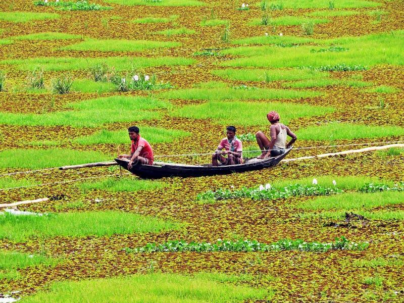 Βάρκα που επιπλέει πέρα από τη λίμνη Khan Jahan Ali Majar Dighi στοκ εικόνα