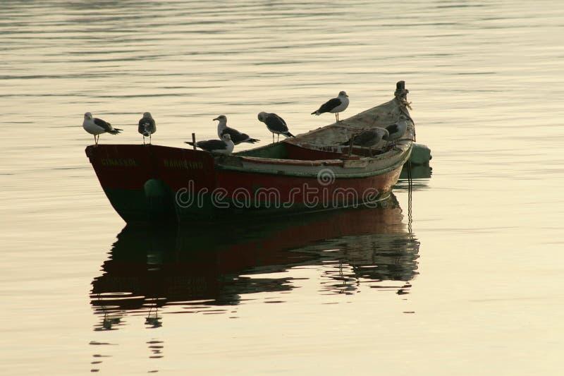 βάρκα seagul στοκ εικόνες με δικαίωμα ελεύθερης χρήσης