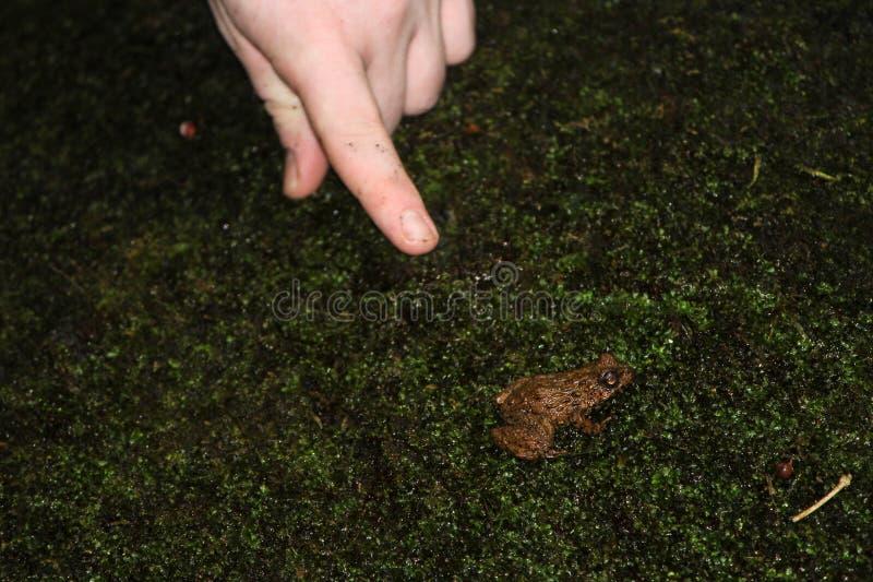 Βάτραχος και ένα χέρι στοκ εικόνα
