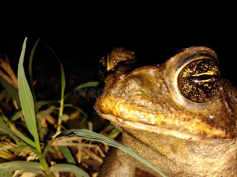 Βάτραχος στην ηρεμία στοκ φωτογραφία με δικαίωμα ελεύθερης χρήσης