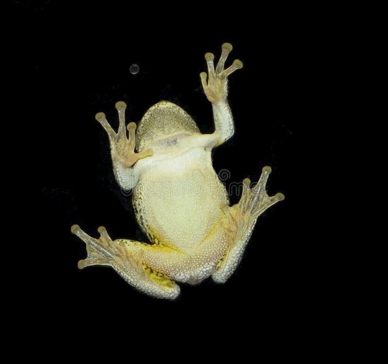 Βάτραχος στο παράθυρο στοκ φωτογραφίες