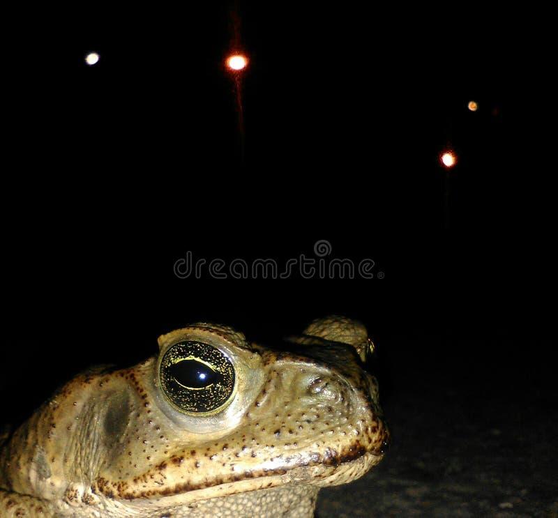 Βάτραχος στο σκοτάδι στοκ φωτογραφία με δικαίωμα ελεύθερης χρήσης