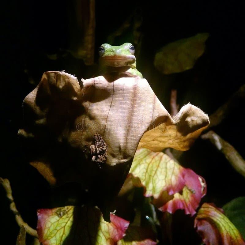 Βάτραχος συνεδρίασης στοκ φωτογραφία με δικαίωμα ελεύθερης χρήσης