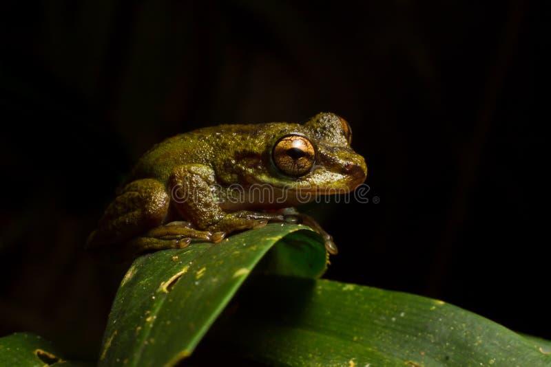 Βάτραχος υδρονέφωσης στοκ εικόνα με δικαίωμα ελεύθερης χρήσης