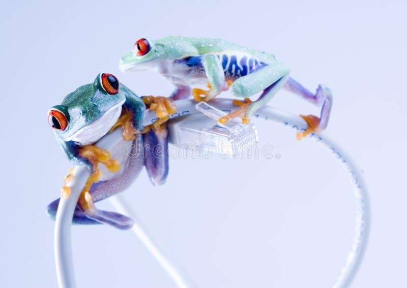 βάτραχος www στοκ φωτογραφίες