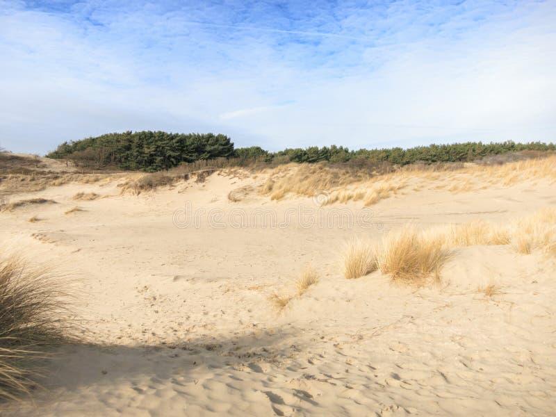 βήματα άμμου της Ρωσίας kurshskaya kosa οριζόντων αμμόλοφων που τεντώνουν στοκ εικόνες