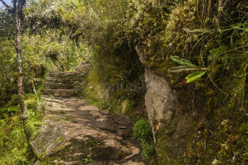 Βήματα μέσω του δάσους Machu Picchu στοκ εικόνα με δικαίωμα ελεύθερης χρήσης