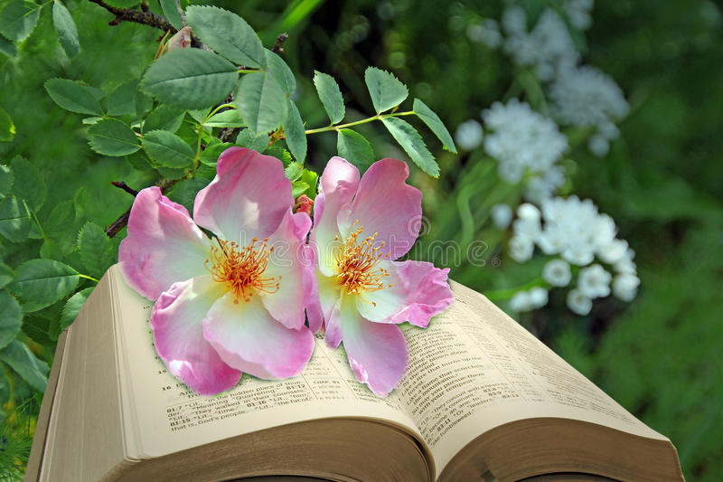 Βίβλος και τριαντάφυλλα στοκ εικόνες