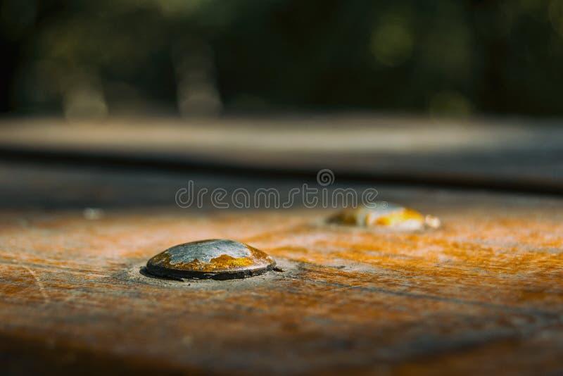 βίδα στο κομμάτι του ξύλου στοκ εικόνες