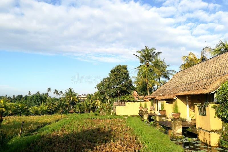 Βίλα ξενοδοχείων θερέτρου του Μπαλί με την άποψη τομέων ρυζιού στοκ φωτογραφία με δικαίωμα ελεύθερης χρήσης