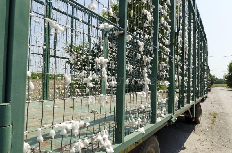 Βαγόνι εμπορευμάτων βαμβακιού στοκ εικόνες