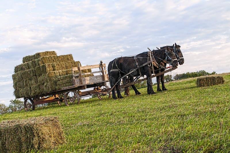 Βαγόνι εμπορευμάτων σανού Amish στοκ εικόνες